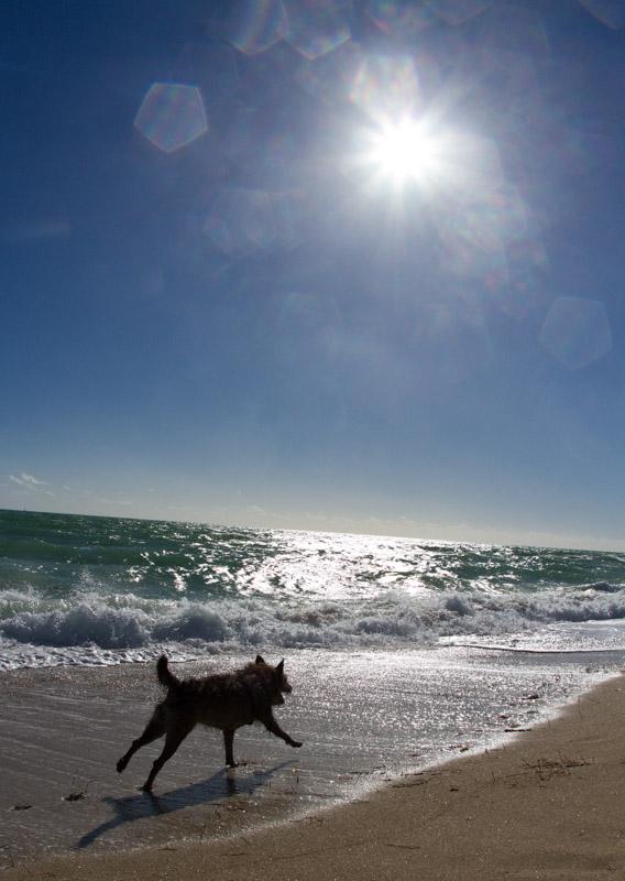 20111127_dog_beach_0252