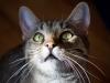 20111216_denver_cats_0472
