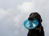 20120520_dog_beach_0342