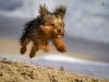 20121216_dog_beach_0106
