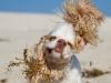 20130126_dog_beach_0005