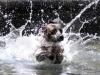 splashcropped