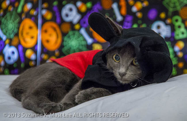 ayshore Veterinary Clinic, cat, costume, Florida < United States < North America, Halloween, HOLIDAY, North Miami Beach, pet
