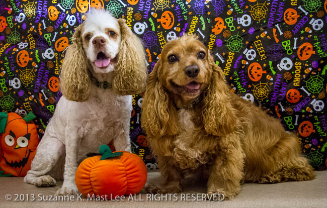 Bayshore Veterinary Clinic, canine, cocker spaniel, costume, dog, Florida < United States < North America, Halloween, HOLIDAY, North Miami Beach, pet, Pixel, WeeGee