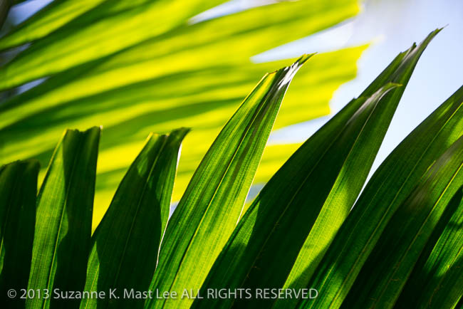 Backlight, dog walk, Florida < United States < North America, Green, Miami Beach, nature, Outdoor, palm frond, shadow, South Florida, Surfside
