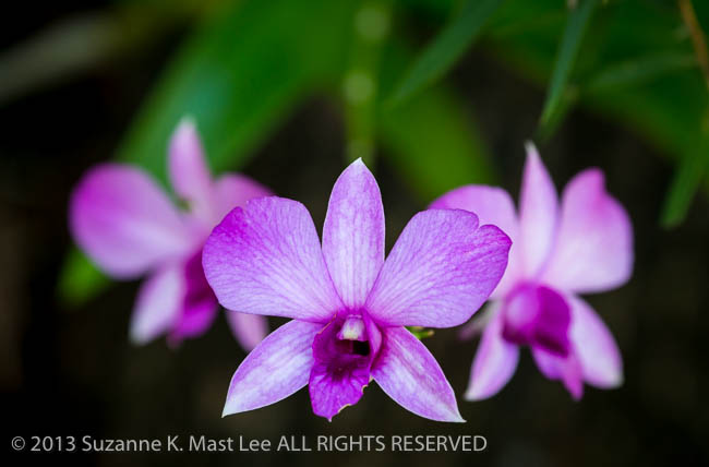 dog walk, Florida < United States < North America, flower, Miami Beach, orchid, Outdoor, purple, South Florida, Surfside