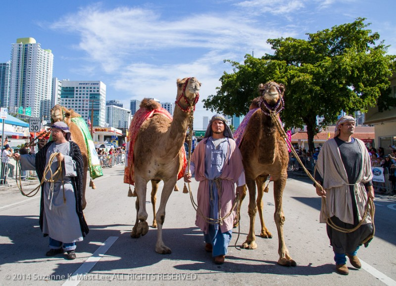 Calle Ocho, camel, celebrations, Florida < United States < North America, Latin, Little Havanna, Miami < South Florida, Outdoor, parade, shepherd, Three Kings Day Parade