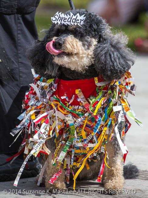 canine, Costume contest, dog, event, Florida < United States < North America, pet, Sawgrass Sanctuary, Shredder, sunrise, Woofstock