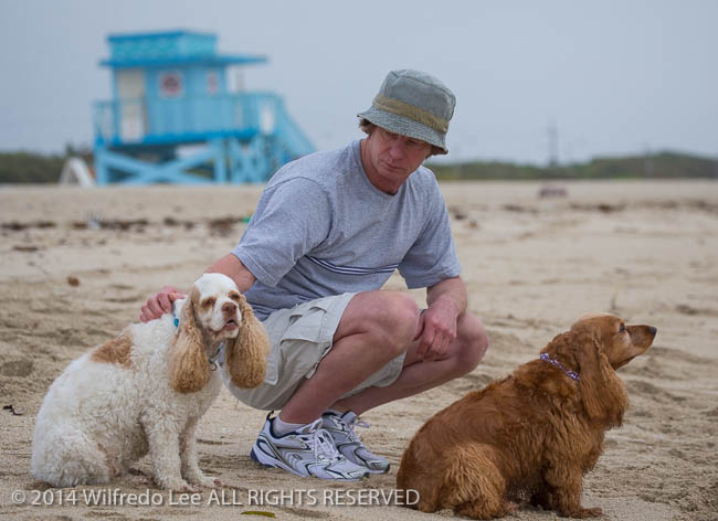 beach, canine, cocker spaniel, Dachshund, dog, Florida < United States < North America, Haulover Beach, lifeguard stand, Miami Beach, mixed breed, mutt, Outdoor, pet, Pixel, Red, red and white parti, Rick, run, sand, South Florida, WeeGee