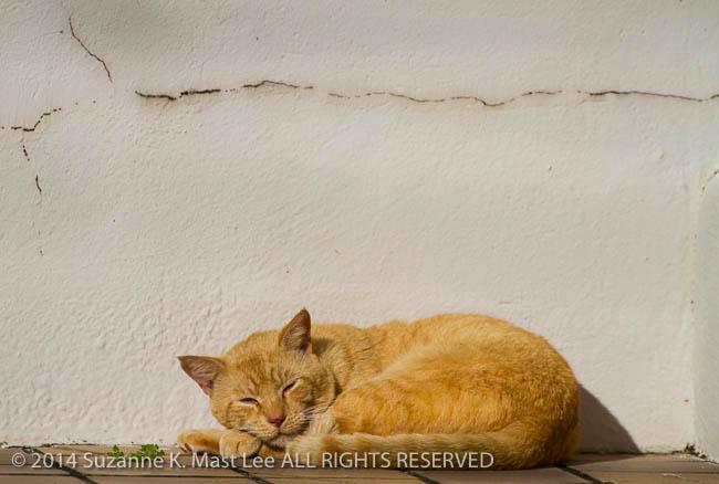cat, dog walk, feral, Florida < United States < North America, Miami Beach, Outdoor, Sleep, South Florida, Surfside