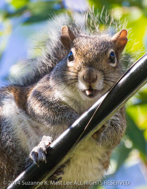 blue sky, dog walk, Florida < United States < North America, leaves, Miami Beach, Outdoor, South Florida, squirrel, Surfside, wire