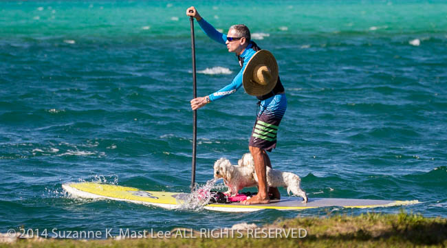 canine, dog, Florida < United States < North America, Haulover Beach, Intercoastal Water Way, Outdoor, paddle board, pet, recreation, South Florida, Water