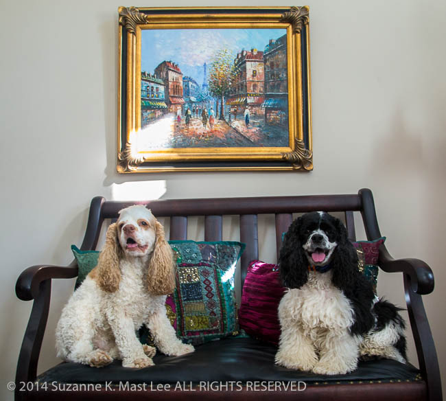 Alabama, Black & White, canine, chair, cocker spaniel, dog, Joy Gipson Bagby, Julia, Maylene, parti-color, pet, pillow, Pixel, Portrait, red and white