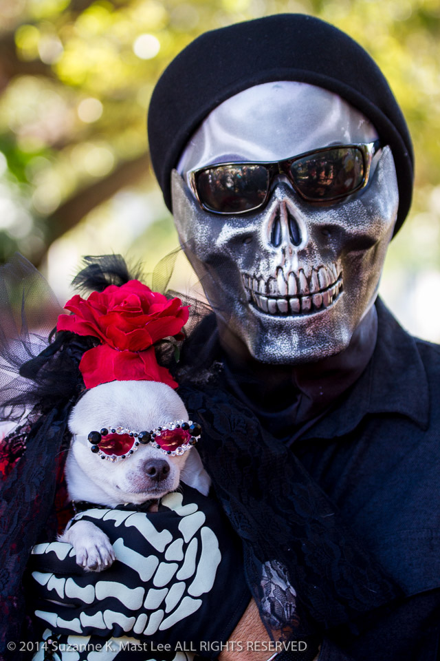 celebrations, Chihuahua, costume, Day of the Dead, dog, Florida < United States < North America, Fort Lauderdale, HOLIDAY, South Florida