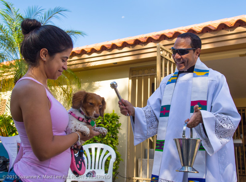Father Wilfredo Contreras of St. Martha's  Catholic Church blesses Coco, a mini dachshund owned by Erica Gutierrez Saturday, Oct. 3, 2015, at the church in Miami Shores, Fla.,  during a pet blessing ceremony in honor of St. Francis.